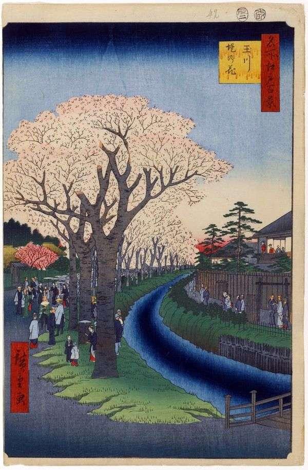 Деревья сакуры вдоль дамбы реки Тамагава   Утагава Хиросигэ