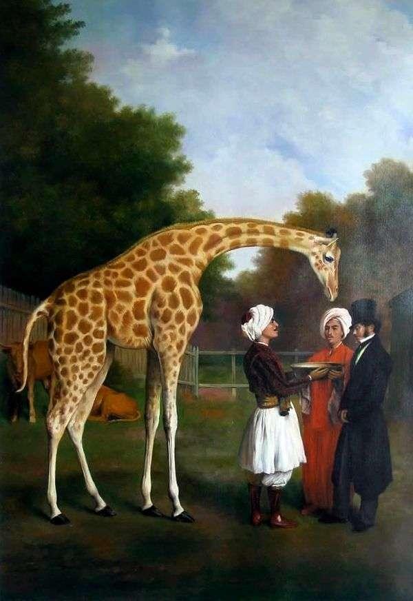 Нубийский жираф   Жак Лоран Агассе