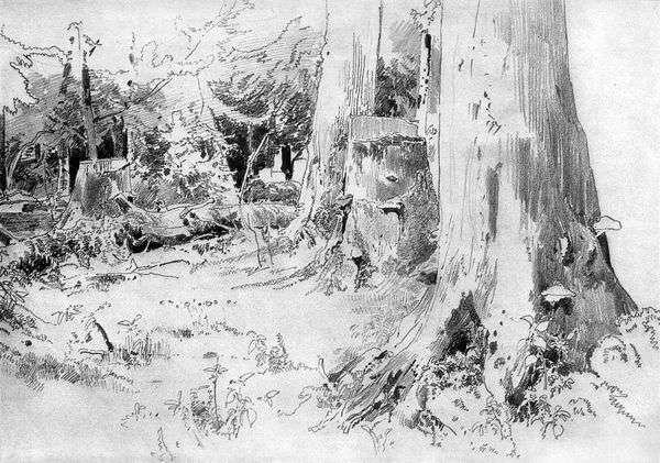 Вырубленный лес   Иван Шишкин